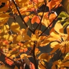 Autumn Leaves Karaoke Eva Cassidy